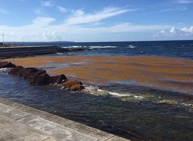 plage bourg moule