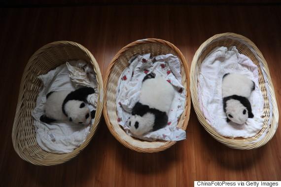 baby panda baskets