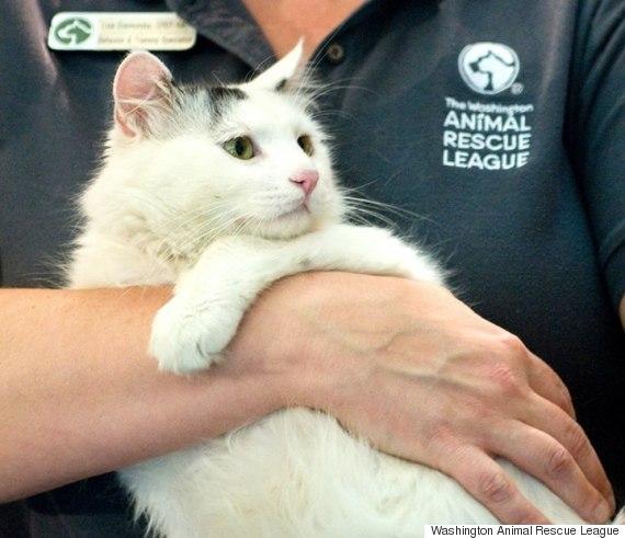washington animal rescue league