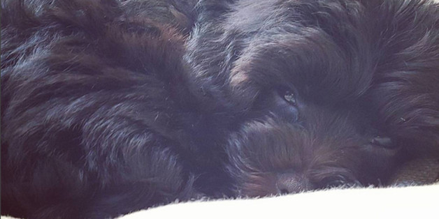 So sieht Demi Lovatos neues Hunde-Baby aus