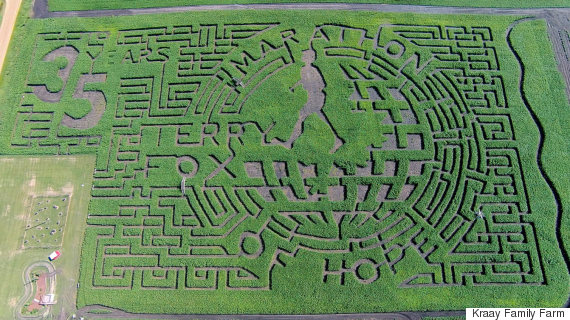 terry fox corn maze