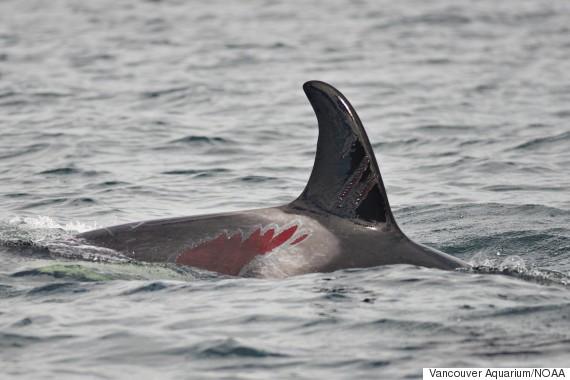 fern injured whale