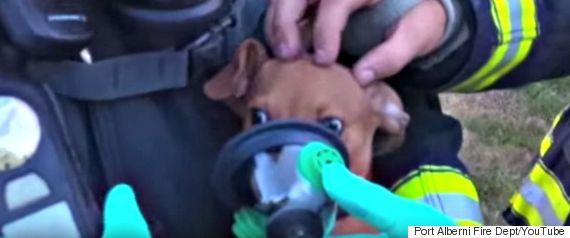 puppy oxygen mask port alberni
