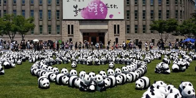 지난 5월 판다들도 다녀간 서울시청 앞 광장