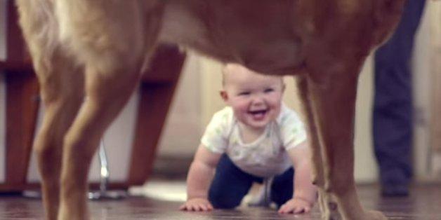 Ein Baby krabbelt zu einem Hund.