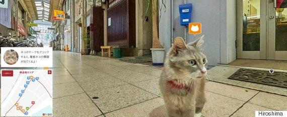 japan cat street view