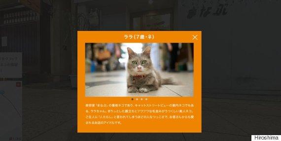 cat japan street view