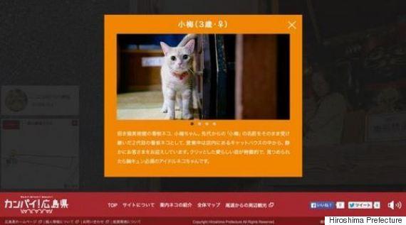 cat street view bios