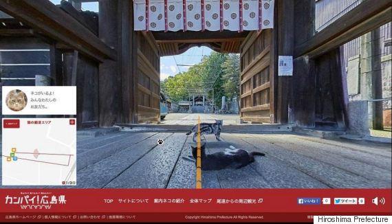 cat street view path