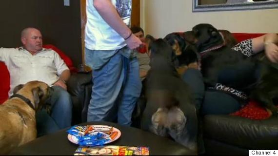 gogglebox dogs