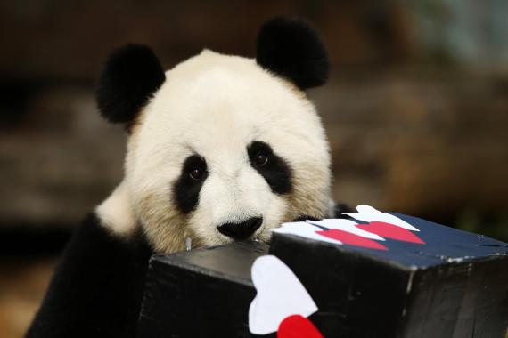 fu ni panda