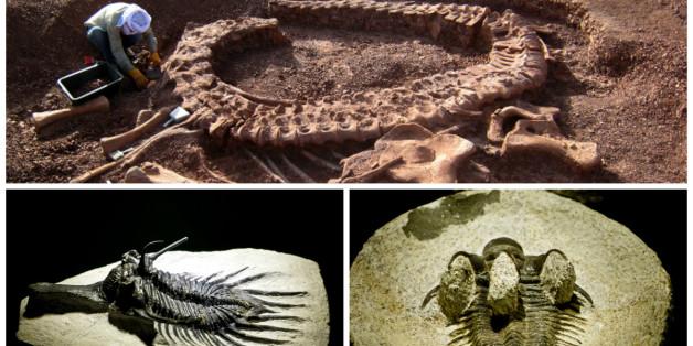 Les fossiles marocains