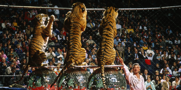 Tigers in the Moscow Circus