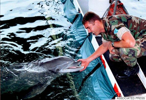 dolphin navy