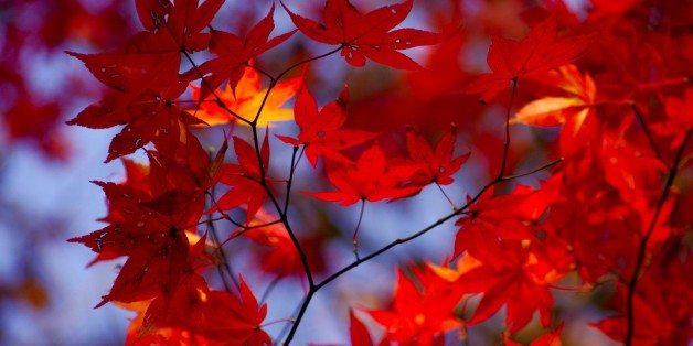 Autumn leaf color@Mt.Yamizo紅葉@八溝山