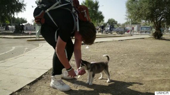 migrant and dog