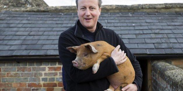 David Cameron: Hier als britische Premierminister mit einem lebenden Schwein