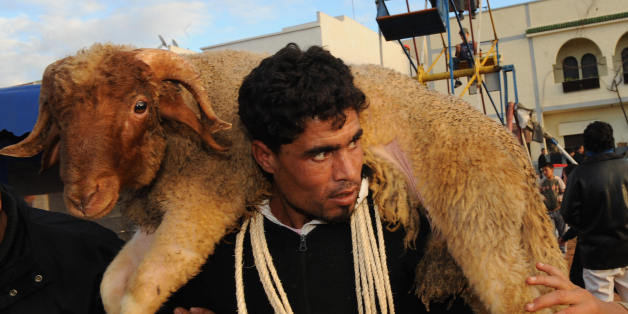 A man carries a sheep on his shoulders a few days before the religious holiday, Aïd el-Kebir in Rabat on December 5, 2008. About five million sheep will be sacrificed in Morocco this year to mark Abraham's sacrifice. AFP PHOTO / ABDELHAK SENNA (Photo credit should read ABDELHAK SENNA/AFP/Getty Images)
