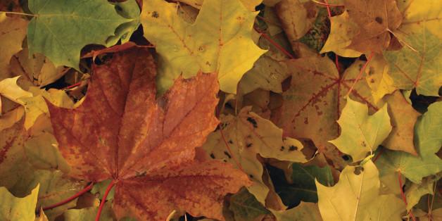 Automne 2016: Pourquoi les feuilles sont rouges, oranges ou jaunes?