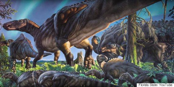 dinosaur find