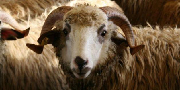 Fête du mouton: Les conseils santé de notre diététicienne