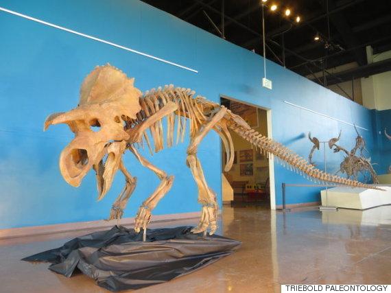 triebold paleontology