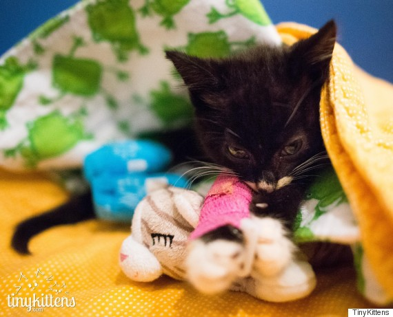 cassidy kitten wheelchair