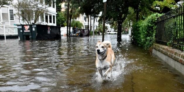 Un chien court dans une rue inondée de Charleston le 4 octobre 2015