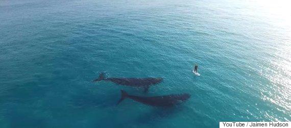 tiny human big whales