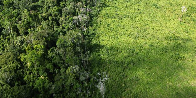 Drohnen gegen den Klimawandel. Schon bald könnte das Realität werden.