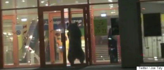 russia bear shot