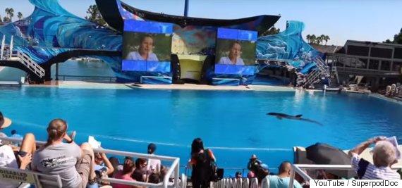 orcas at seaworld