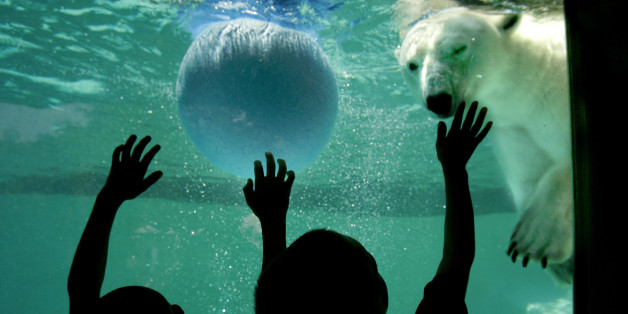 Oldest Polar Bear in the U.S. Dies, Reminding Us of Aging Animal Populations in Captivity