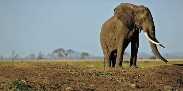 Encore 22 éléphants empoisonnés au Zimbabwe