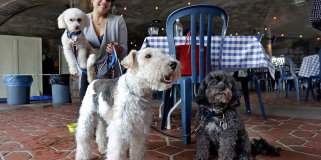 """FILE - In this May 19, 2015 file photo, Michelle Vargas, with, from left,  8-year-old Bichon Frise-Poodle mix """"Carmine,"""" 11-year-old Wire Haired Terrier """"Lucy,"""" and 10-year-old Shih Tzu-Poodle mix """"Luigi,"""" visit a cafe in a Manhattan park, on New York's Upper West Side. New York's pooches will be able to venture onto restaurant patios under a new state law that will allow restaurants to open their outdoor dining areas to canine companions. The measure was signed into law late Monday, Oct. 2"""