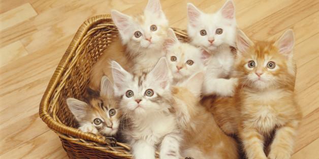 Darf man Katzen essen?