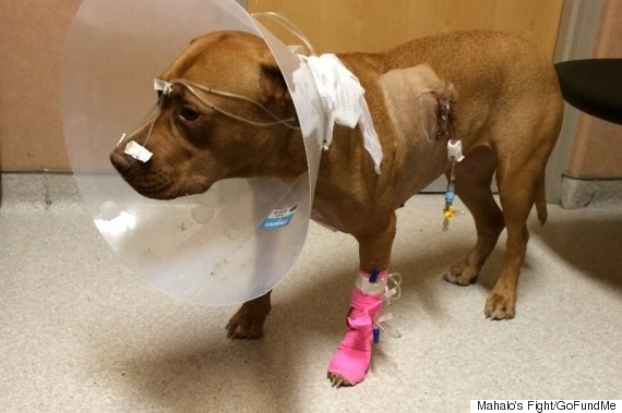 mahalo after surgery