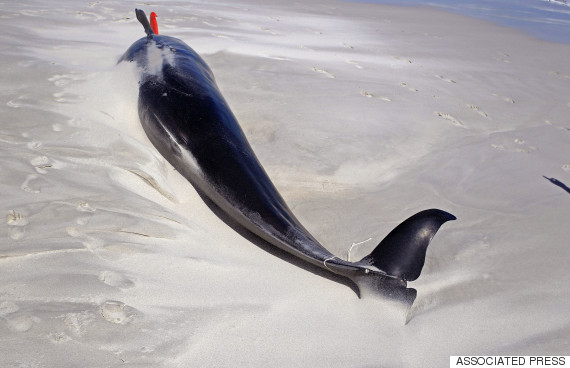 whale dead
