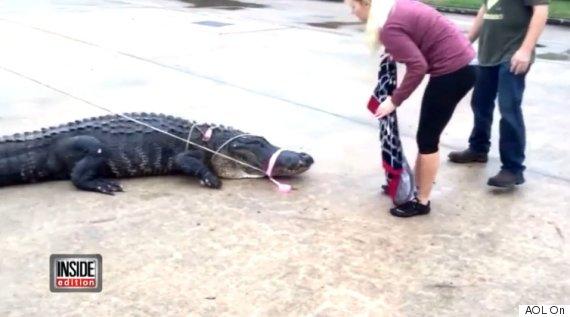 godzilla alligator