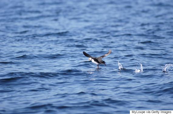 atlantic canada birds