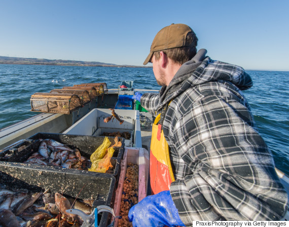 lobster fisherman canada