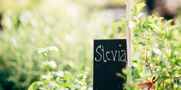 Stevia gilt als süße Alternative zu Zucker.