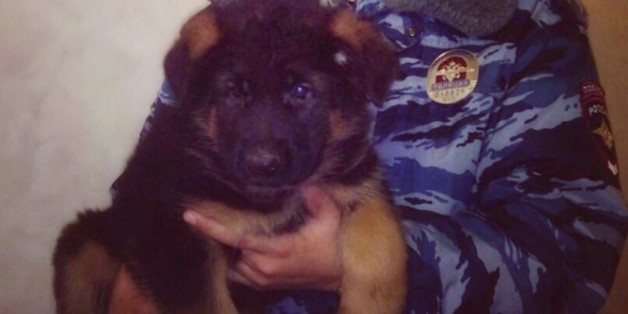 In this undated photo provided by the Russian Interior Ministry, a Russian police officer holds a puppy, named Dobrynya,  Russian Interior Ministry said Friday, Nov. 20, 2015 that it will send a puppy to their French counterparts as a sign of solidarity. According to the letter signed by Russian Interior Minister Vladimir Kolokoltsev, the ministry hopes that a puppy - named Dobrynya - will take a place of French service dog 'Diesel' which died in a special operation held in Paris on November 18.