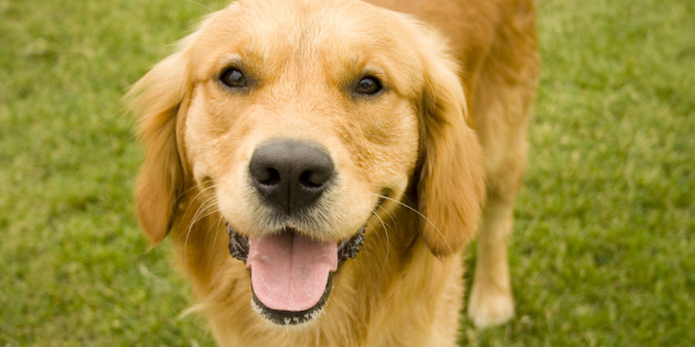 Here's How Your Dog Really Feels About You, According To Science