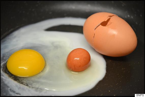 egg within an egg