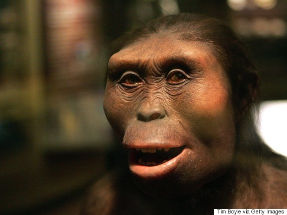 lucy the australopithecus