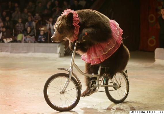 ukraines national circus
