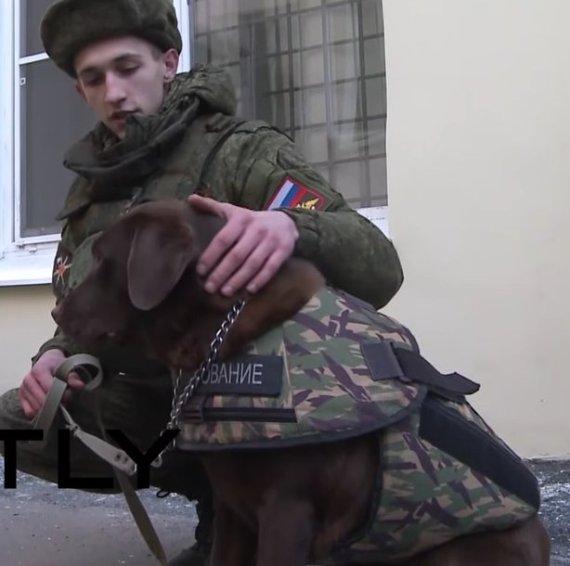 police dog armour