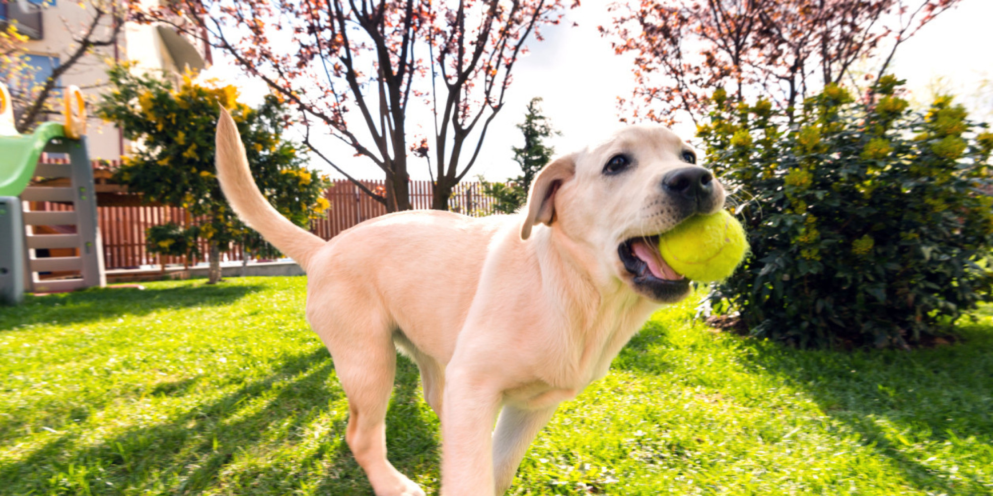 Essentials to Know of a Dog Play - Inside Dogs World  |Dog Play