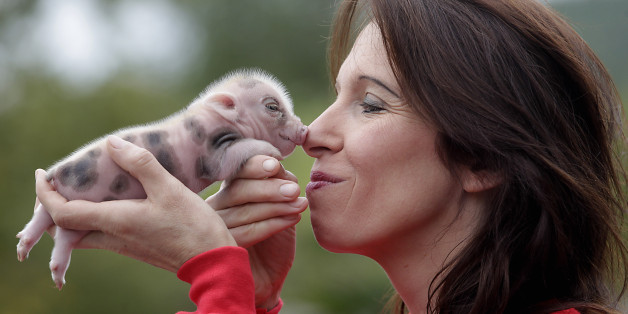 From Cloned Beef to Micropig Pets, We're Playing God by Editing Genes